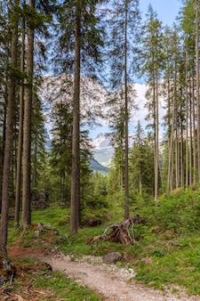 Sentiero panoramico in un bosco di conifere ai piedi delle alpi italiane