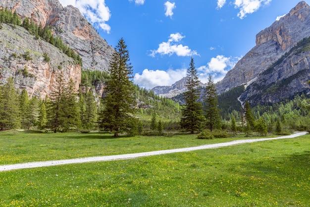 Un sentiero panoramico attraverso un prato alpino fiorito circondato dalle vette delle alpi italiane