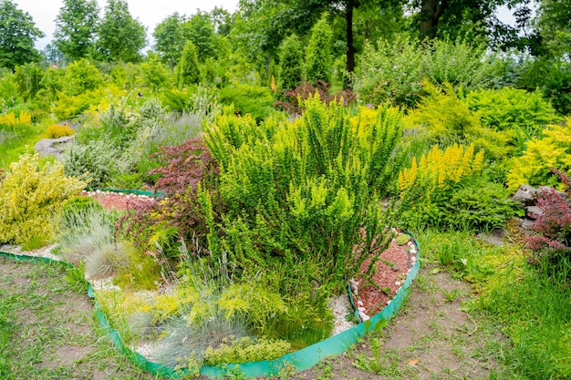 Vista panoramica di aiuole colorate. prato verde lussureggiante. progettazione del paesaggio.