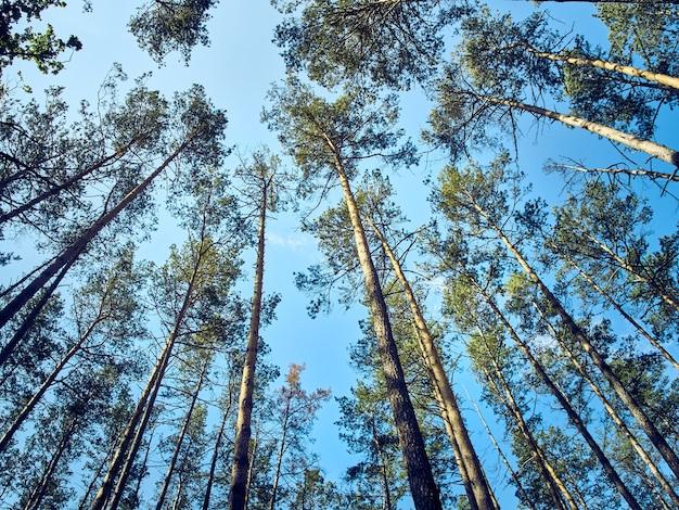 Vista panoramica di alberi ad alto fusto nella foresta.