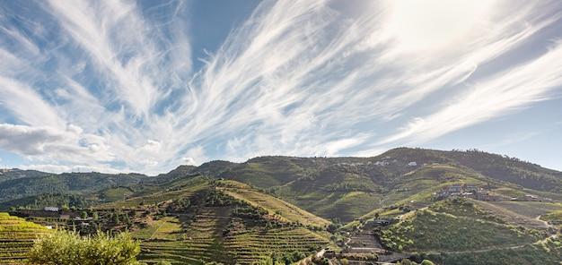 Vista panoramica sui vigneti piantati in montagna
