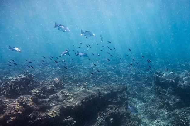 Scuola di pesci che nuotano sulla barriera corallina nel mare blu