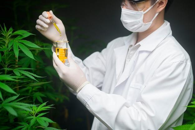 Uno scienziato sta controllando e analizzando un esperimento di cannabis, tenendo in mano un bicchiere di olio di cbd in un laboratorio