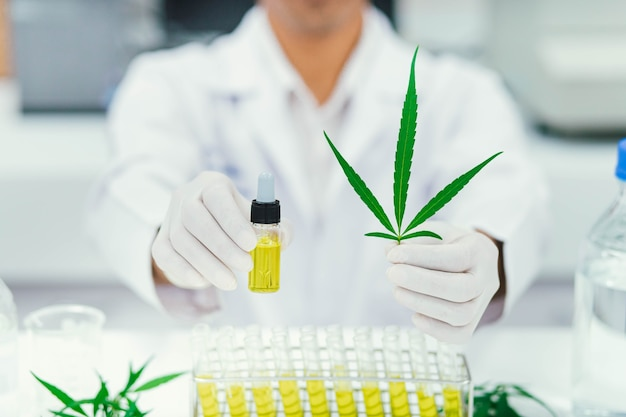 Scienziato in test di laboratorio olio di cbd estratto da una pianta di marijuana. farmacia sanitaria dalla cannabis medica.