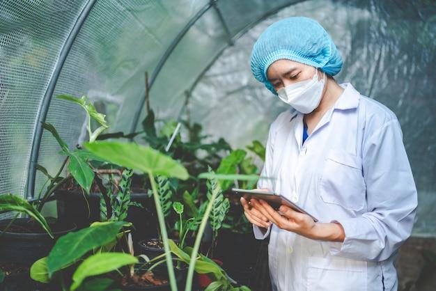Ricerca scientifica in agricoltura di piante fogliari in serra da laboratorio di medicina, canapa o germogli di erbe che vivono in fattorie naturali per farmaci, crescita di giardini fioriti organici per l'industria con scienza botanica