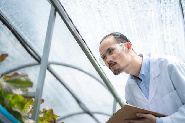 Scienziato che lavora alla ricerca in agricoltura pianta verde presso la serra del laboratorio di scienze biologiche, test di esperimento biologico per la biotecnologia alimentare medica, biologo di ecologia botanica nella crescita agricola