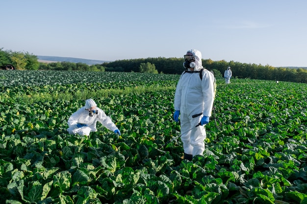 Scienziati che indossano una maschera chimica dell'attrezzatura protettiva bianca e occhiali sul campo due dell'azienda agricola
