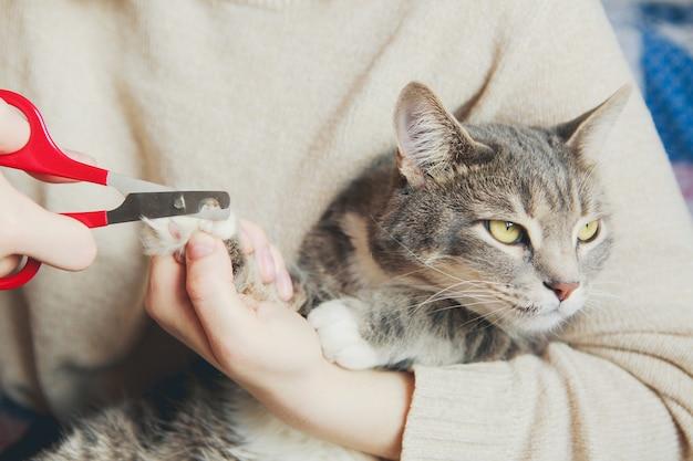 Forbici che tagliano un gatto grigio