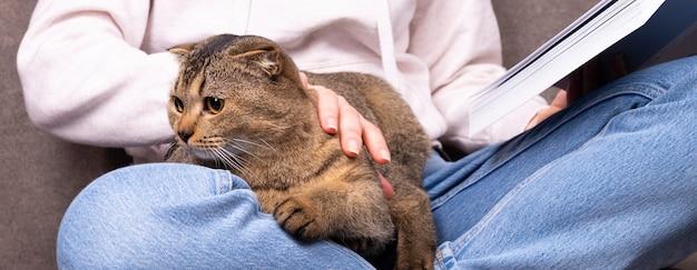 Il gatto scottish fold siede tra le braccia di una donna. l'animale si nasconde nelle mani del proprietario che legge il libro.