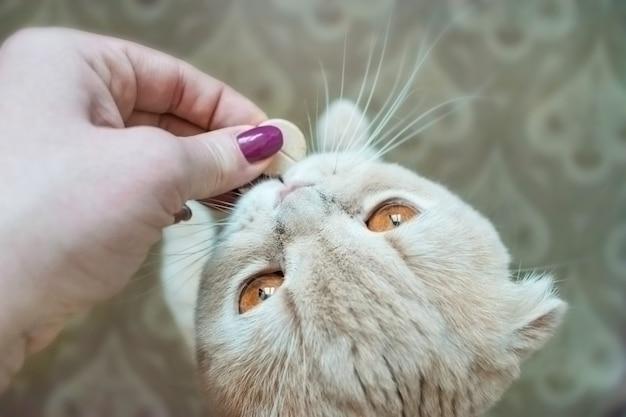 Scottish fold cat con gli occhi dorati prende una pillola da vicino