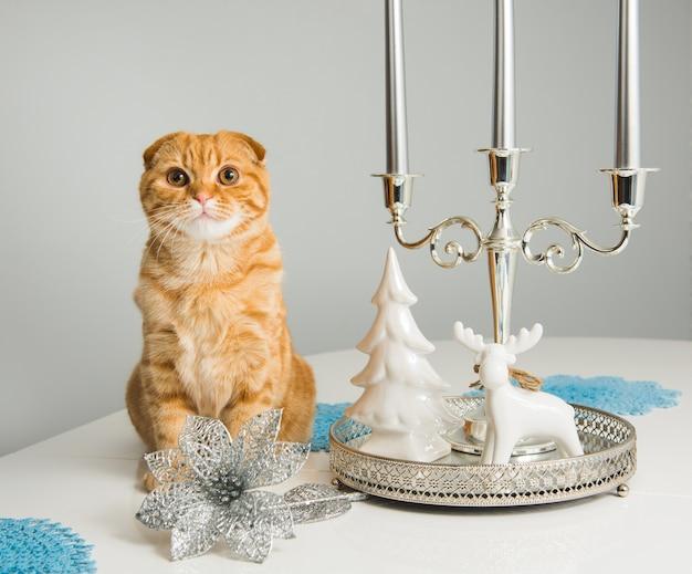 Gatto rosso scottish fold con candeliere su sfondo bianco in vacanza. gatto ed etichetta.