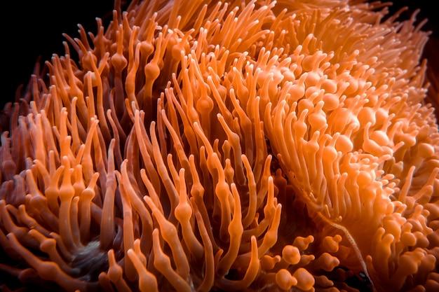 Vista del primo piano dell'anemone di mare