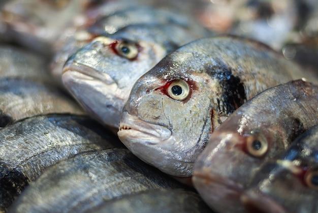 Pesce branzino venduto al mercato del pesce, primo piano