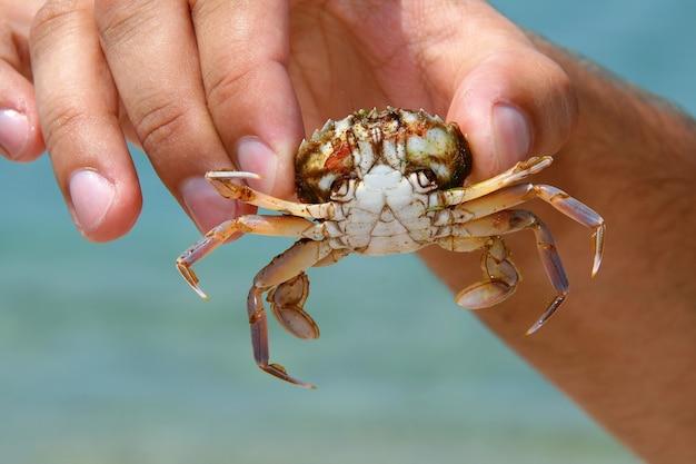 Granchio di mare in mano