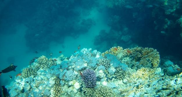 Pesce di mare vicino al corallo sott'acqua