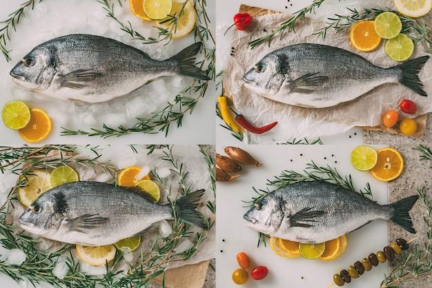 Pesce orata di mare collage di foto di set