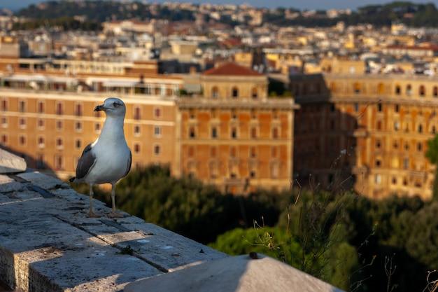 Un gabbiano seduto sul muro del vecchio castello di sant'angelo a roma italy