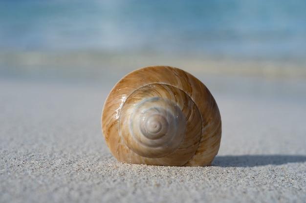 Conchiglia di mare sulla spiaggia di sabbia bianca. concetto di vacanza e viaggio.