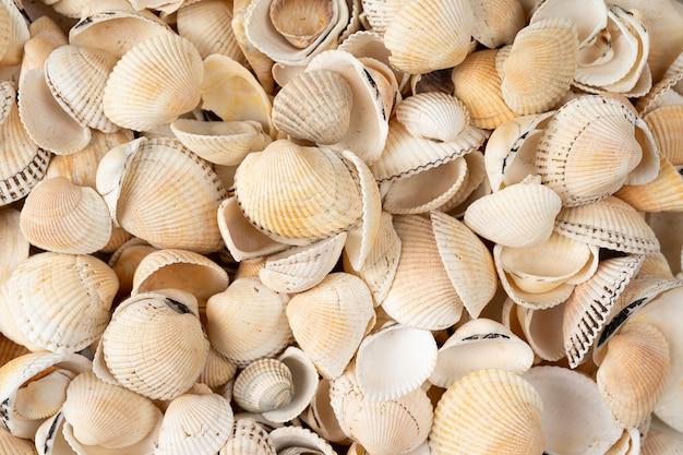 Sfondo di conchiglia di mare, molte conchiglie diverse, conchiglie di mare bianche e beige piegate insieme close-up in alta risoluzione per lo sfondo o il design