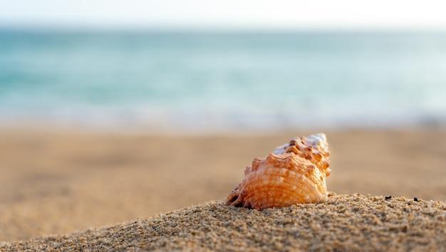 Conchiglia sulla spiaggia di sabbia con mare turchese sullo sfondo messa a fuoco selettiva spazio copia