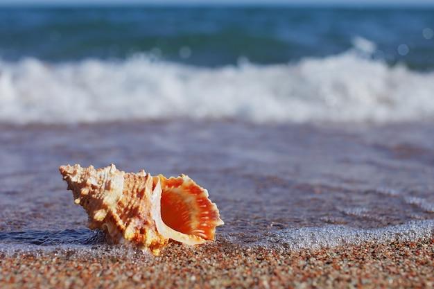 Conchiglie di mare sulla spiaggia. spiaggia di sabbia con onde. concetto di vacanza estiva. vacanze al mare.