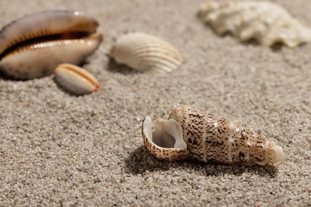 Conchiglie di mare sulla spiaggia pulita di estate di sabbia sfondo e carta da parati concetto copia spazio