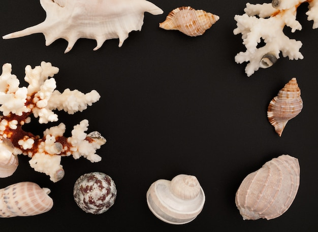 Le conchiglie e i coralli incorniciano sopra su un fondo nero