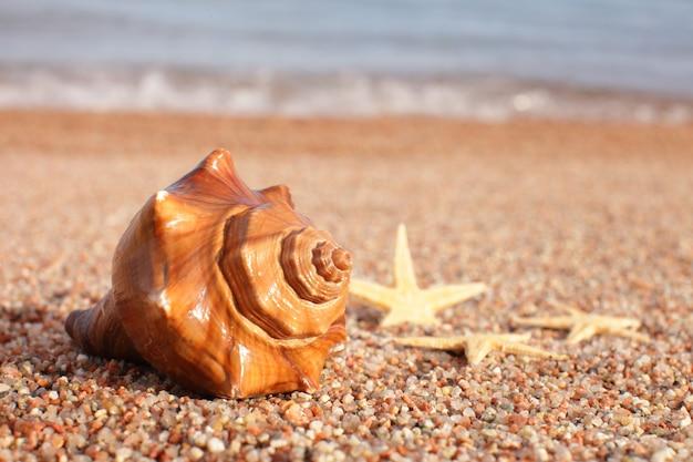 Conchiglie e stelle marine sulla spiaggia. concetto di vacanza estiva. vacanze al mare