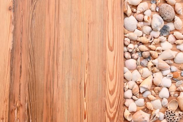 Lumaca di mare vacanze in legno di pino viaggi in spiaggia