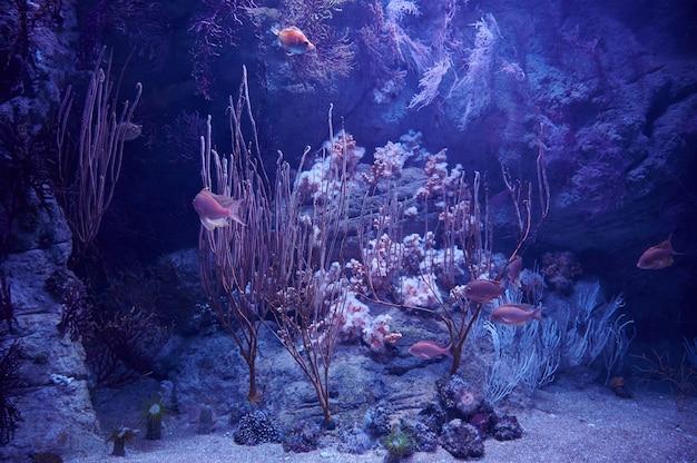 Fondale con pesci e vegetazione marina