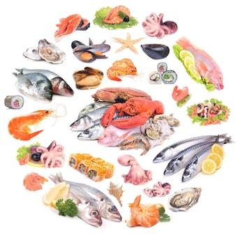 Collezione di frutti di mare
