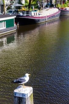 Gabbiano sullo sfondo di un canale e barche ad amsterdam.