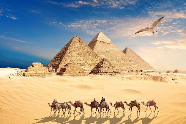 Un gabbiano vola vicino alla carovana di cammelli con beduini vicino alle piramidi d'egitto nel deserto di giza