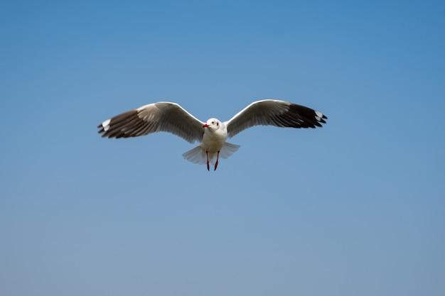 Volo del gabbiano sul cielo