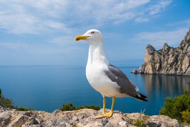 Ritratto di gabbiano contro la riva del mare. vista ravvicinata del gabbiano uccello bianco seduto sulla spiaggia. gabbiano selvatico con sfondo blu naturale.