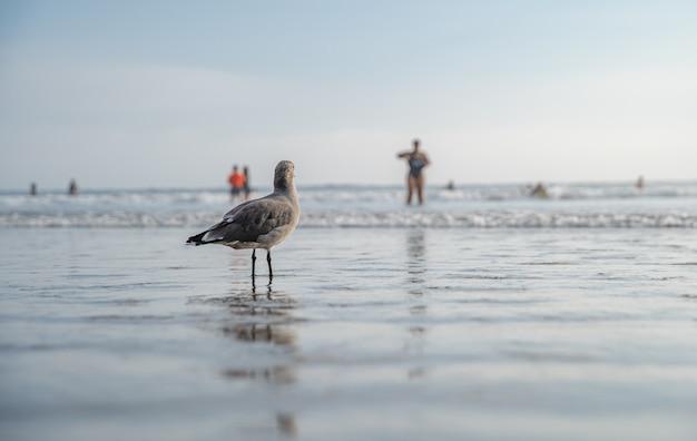 Un gabbiano su una spiaggia pubblica sul mare a guardare le persone che fanno il bagno e i surfisti