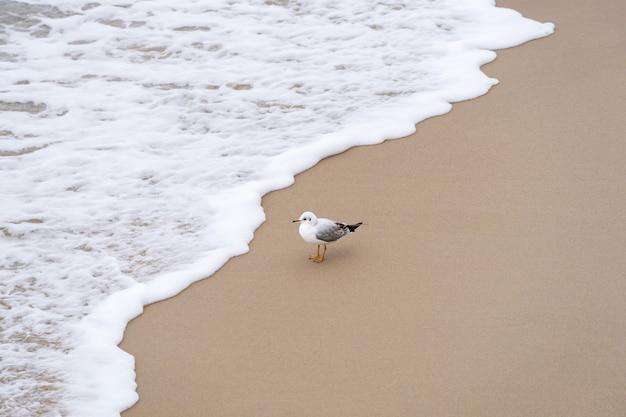 Il gabbiano su una spiaggia sabbiosa guarda l'onda