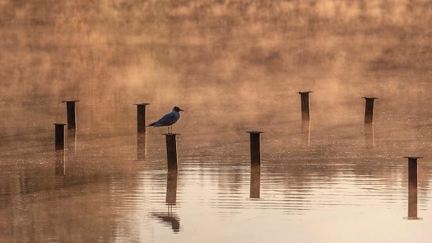 Il gabbiano si siede su una colonna di metallo su un lago nebbioso