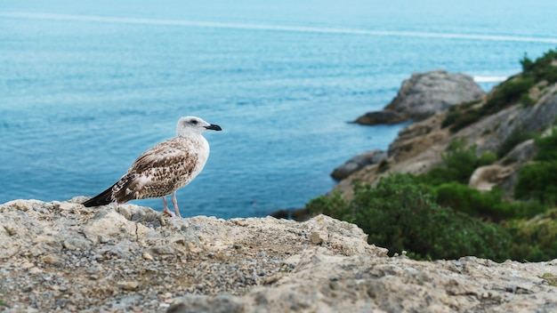 Un gabbiano si siede su una roccia contro il mare blu. uccelli della zona costiera del mar nero