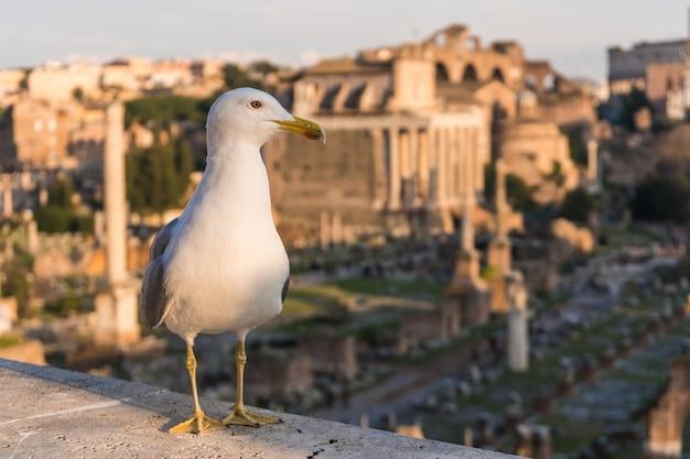 Gabbiano seduto sullo sfondo di antiche rovine romane