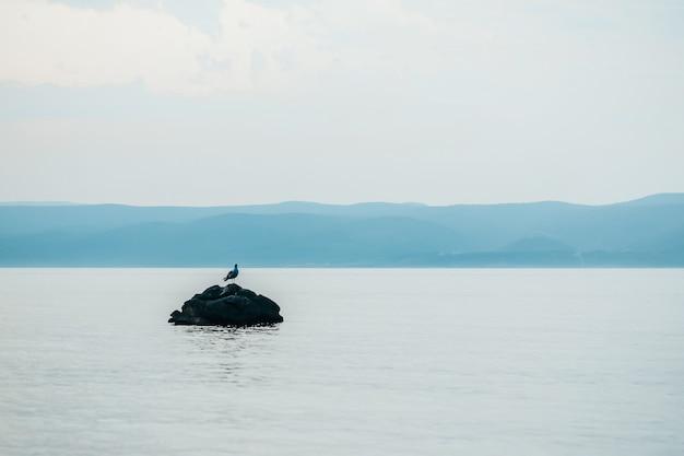 Gabbiano su una pietra nel mare.