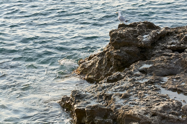 Gabbiano sulla costa sassosa e piccoli surf