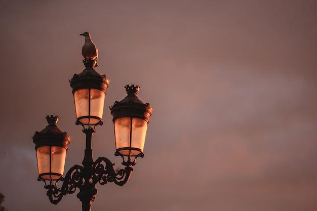 Gabbiano sopra un lampione durante un tramonto a dublino