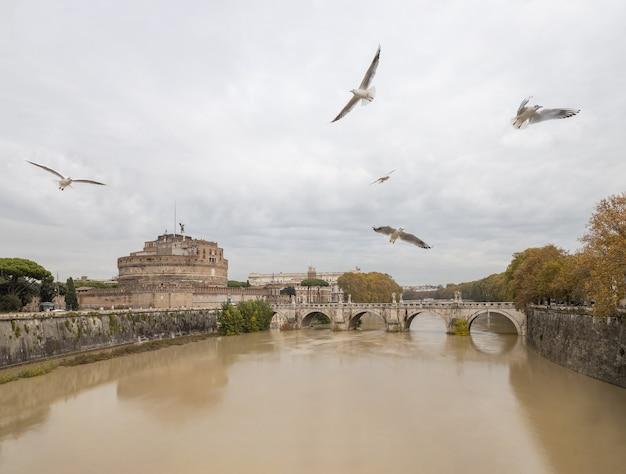 Gabbiani che sorvolano il tevere, roma, italia