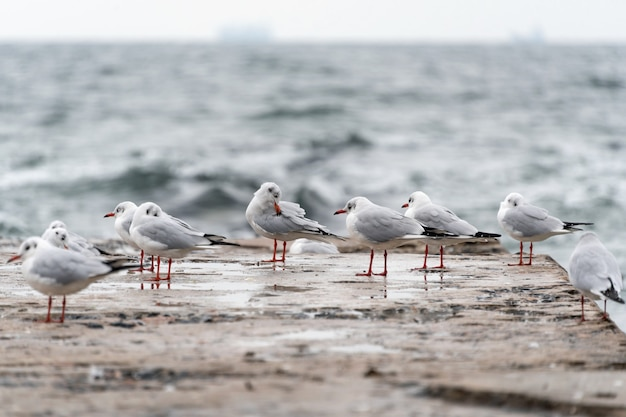Gabbiani sul vecchio molo sulla costa del mar nero in cattivo tempo tempestoso freddo.