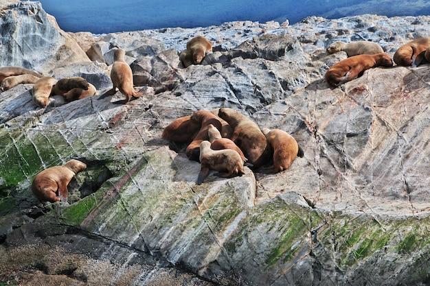 Le foche sull'isola nel canale di beagle chiudono la città di ushuaia in argentina