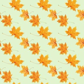 Modello senza cuciture da belle foglie autunnali gialle di acero su verde chiaro
