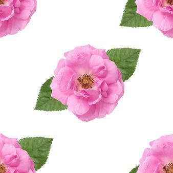 Modello senza cuciture con fiore di rosa damascena isolato su bianco