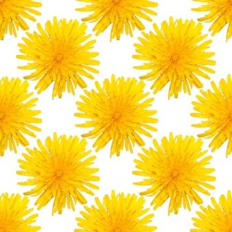 Modello senza cuciture di fiori di tarassaco giallo isolato su sfondo bianco. foto di alta qualità