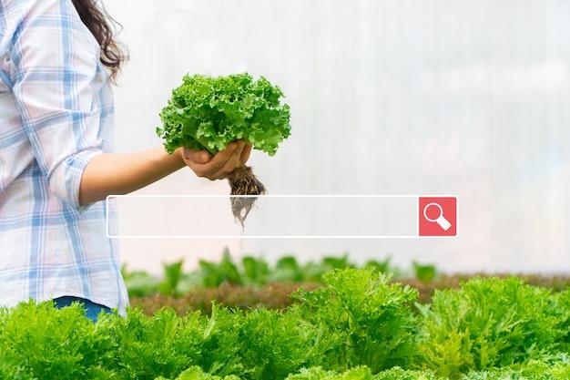 La ricerca di una barra di navigazione in internet sullo sfondo è una donna contadina che tiene in mano insalata di verdure crude in una fattoria idroponica. ricerca navigazione internet dati informazioni networking concept